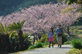 抱湖園の桜