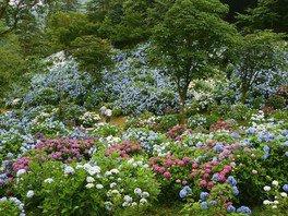 舞鶴自然文化園 アジサイ園開園