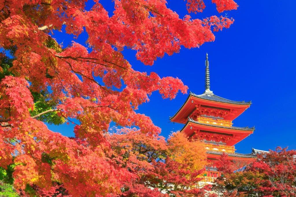 京都 紅葉 ライト アップ ランキング