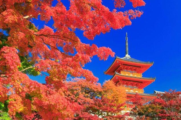 東山(清水寺)の紅葉