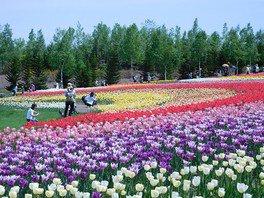 広大な敷地で思うぞんぶん春の花を楽しめる