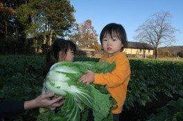 新鮮お野菜収穫体験