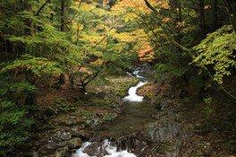 滑沢渓谷の紅葉