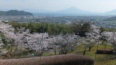 高岡公園の桜