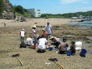 白浜水族館の磯採集体験