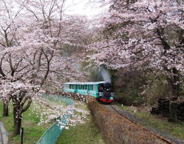 伊達のふる里桜まつり2019