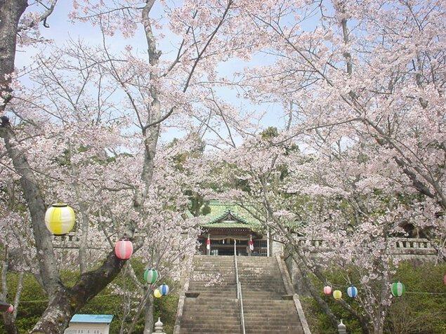 【桜・見ごろ】宇部護国神社