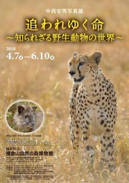 中西安男写真展「追われゆく命~知られざる野生動物の世界~」