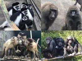 世界チンパンジーの日ガイドリレー