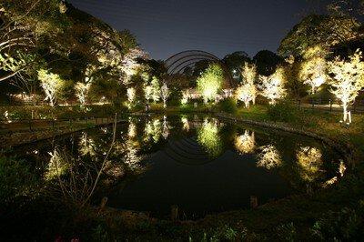 ITOZU YORU ZOO~夜の動物園~