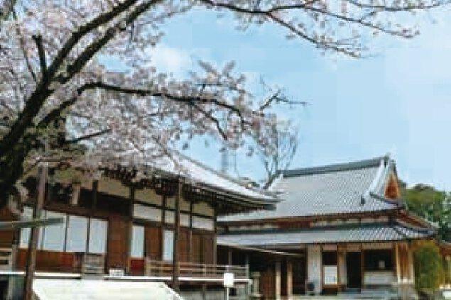 【桜・見ごろ】宗隣寺