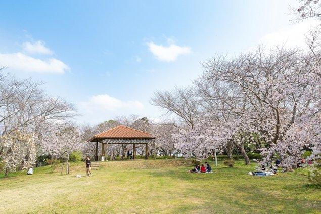 水郷潮来 権現山公園桜まつり