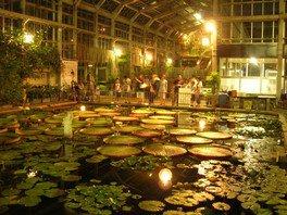 サガリバナと夜の植物の競演(夜間開園)