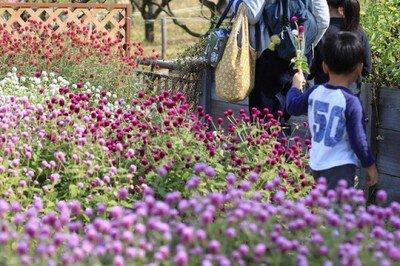 夏の花摘み園(8月)2回目