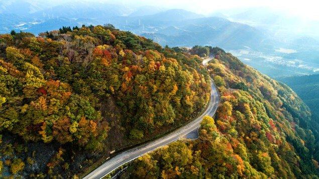 伊吹山ドライブウェイの紅葉