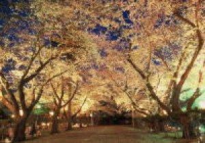 十和田市春まつり