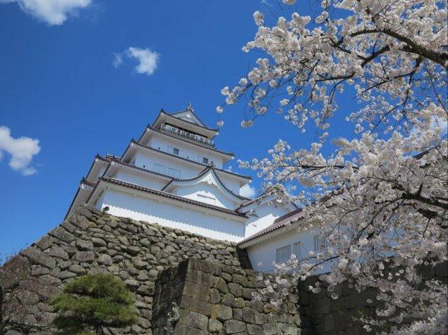 【桜・見ごろ】鶴ヶ城