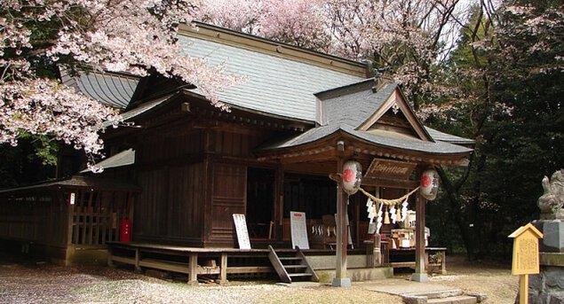 【桜・見ごろ】磯部稲村神社