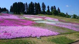 芝桜フェスタ