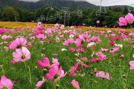 出会いの場in信濃町 黒姫高原で見つかる素敵なご縁