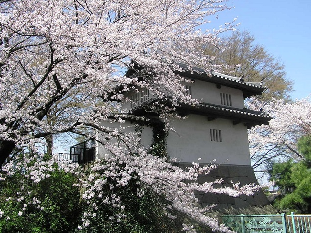 高崎城址公園の桜
