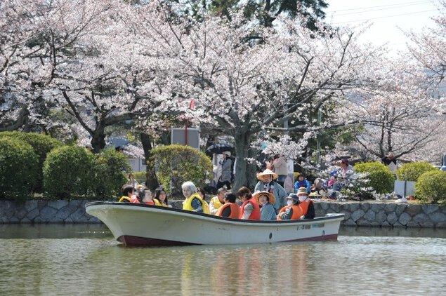 【桜・見ごろ】九華公園