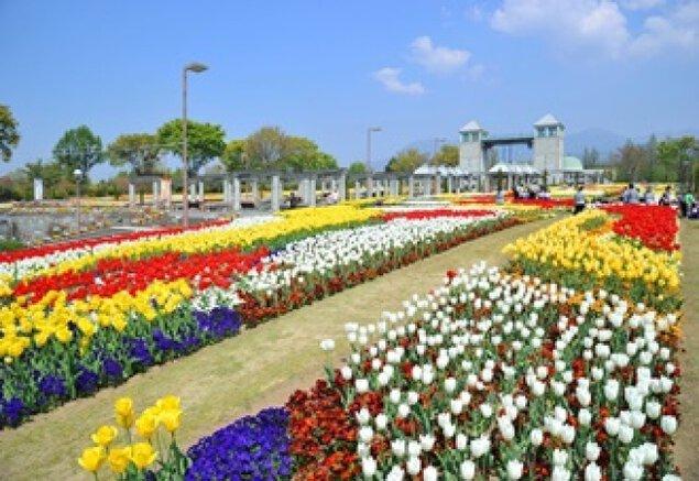 【花・見ごろ】ぐんまフラワーパーク チューリップ