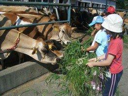 食から始める子育てワークショップ ~酪農~