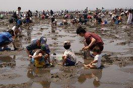 金田海岸の潮干狩り