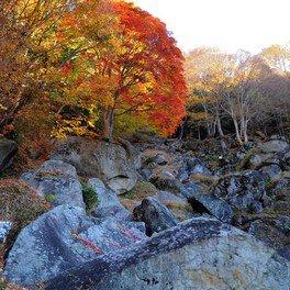 栖雲寺の紅葉