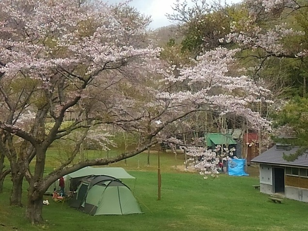 熊石休養村の桜