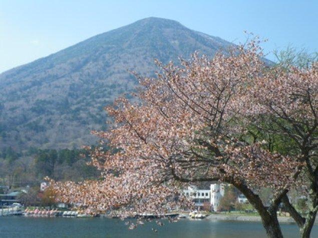 【桜・見ごろ】中禅寺湖