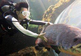 アマゾンの魚たちと泳ごう!~ダイビング体験(スクーバ)~(なかがわ水遊園)