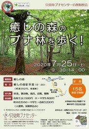 只見町ブナセンター自然観察会「癒しの森のブナ林を歩く!」