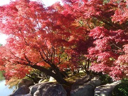 びわこ文化公園の紅葉