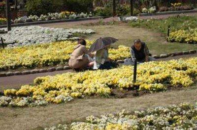 装飾花壇 抜き取りイベント 秋の陣