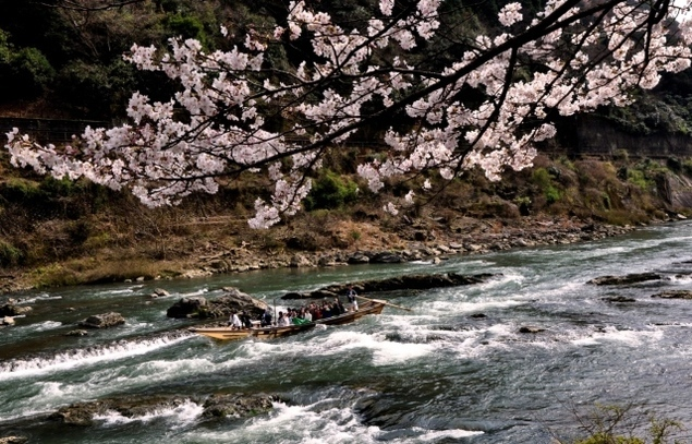 【桜・見ごろ】保津峡