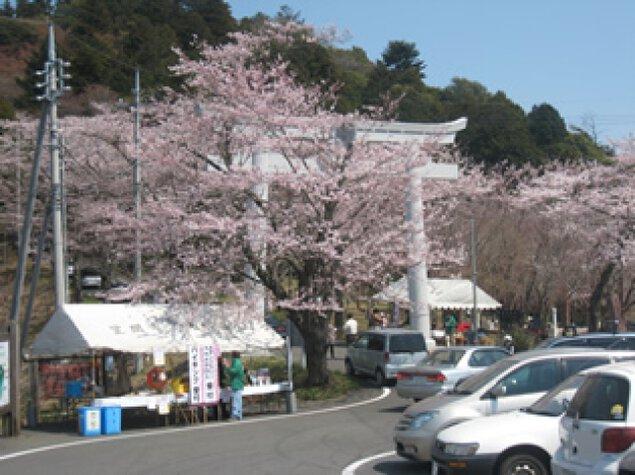 あたご山桜まつり