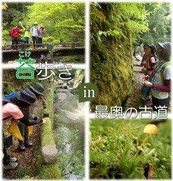 苔歩き(こけあるき)in 最奥の古道