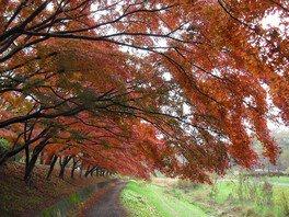 都立武蔵野公園の紅葉