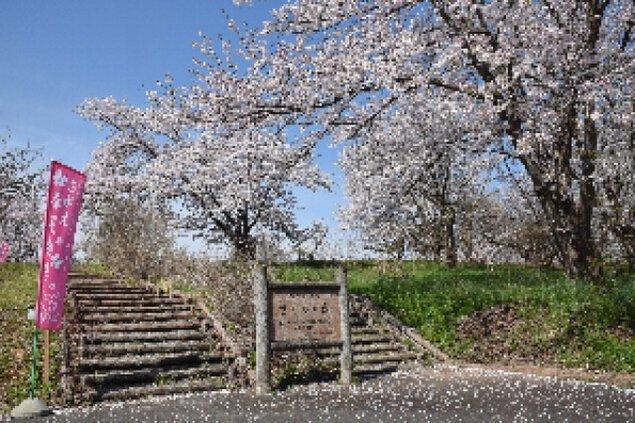 寒河江桜まつり