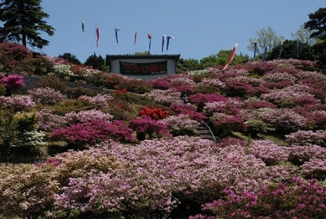 竹の古場公園 つつじ祭り