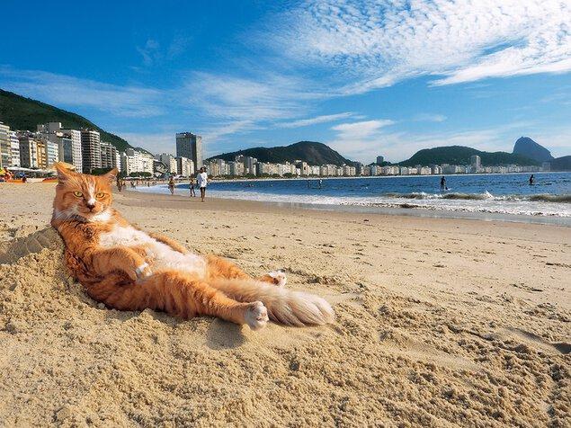 【開催中止】写真展「岩合光昭の世界ネコ歩き2」