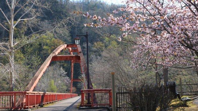 【桜・見ごろ】滝の上公園