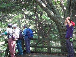 新緑の和泉葛城山観察会