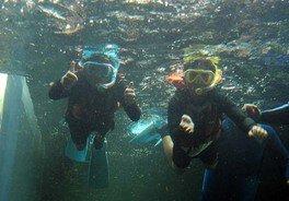 アマゾンの魚たちと泳ごう!~ダイビング体験(シュノーケル)~(なかがわ水遊園)