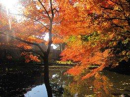 御殿山庭園の紅葉