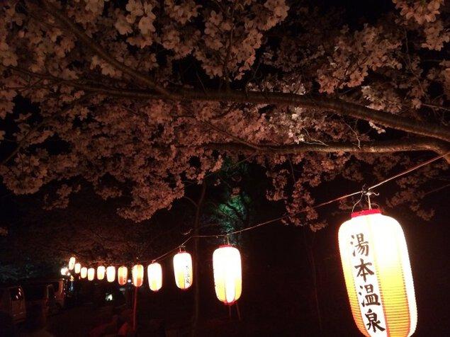 大寧寺2021年桜ライトアップ