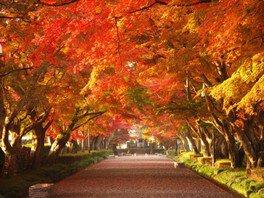 大山参道の紅葉