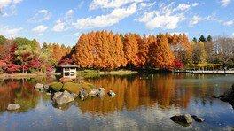 栃木県中央公園の紅葉